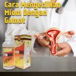 Cara Mengecilkan Miom Dengan Jelly Gamat