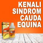Obat Untuk Penyakit Sindrom Cauda Equina Jelly Gamat