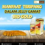 Manfaat Teripang Emas Dalam Jelly Gamat Bio Gold