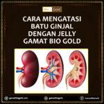 Cara Mengatasi Batu Ginjal Dengan Jelly Gamat Bio Gold