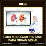 Cara Mencegah Penyakit Ginjal Dengan Jelly Gamat Bio Gold