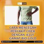 Cara Mencegah Penyakit Liver Dengan Jelly Gamat Bio Gold